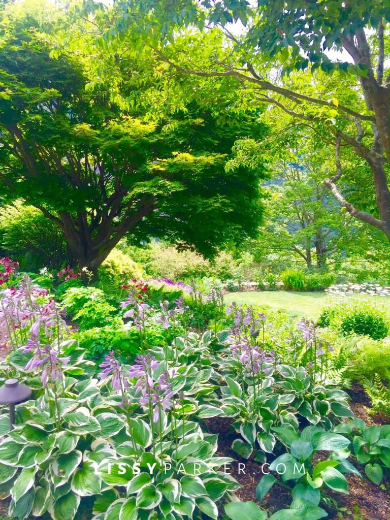 garden full of shade plants