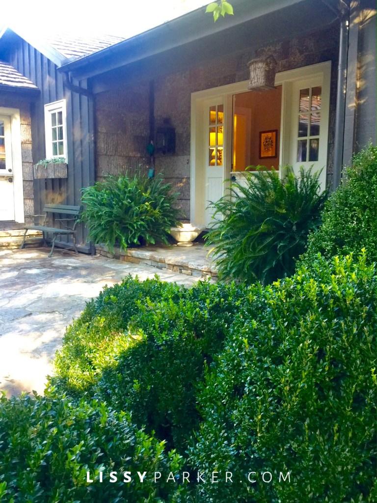 entry garden ferns