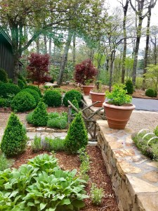 The new courtyard garden