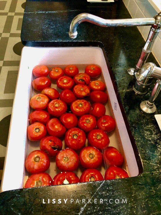 Fall harvest tomatoes
