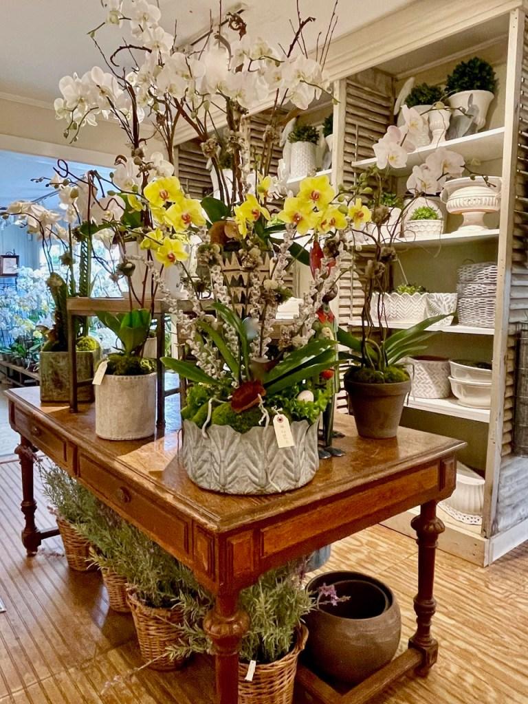 Boxwoods spring