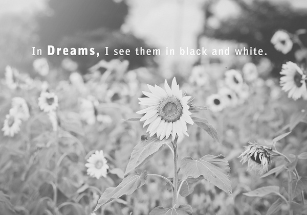 Not All Dreams Are in Color
