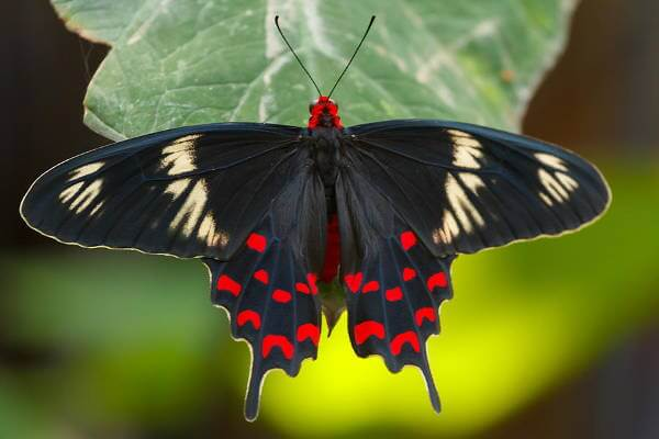 10 Most Beautiful Butterflies Around The World - ListAmaze