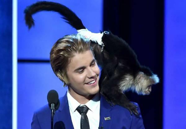 Justin Bieber'sCapuchin Monkey