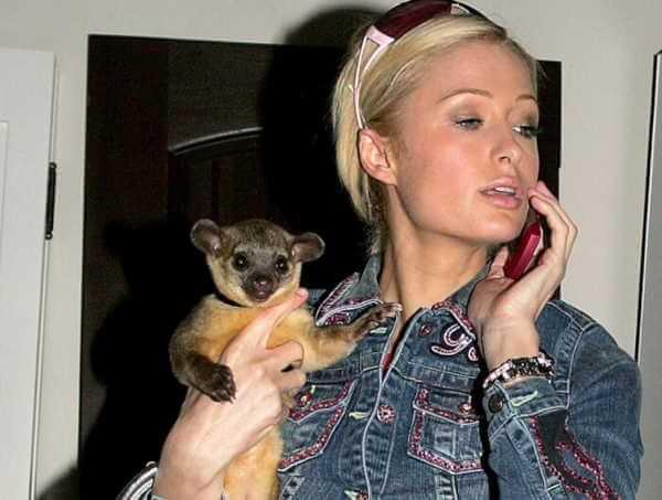 Paris Hilton's Kinkajou