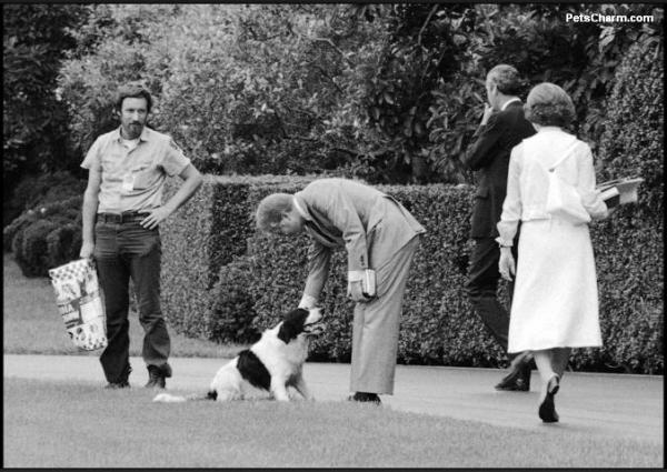 Presidential dogs:Jimmy and Rosalynn Carter play with their dog Grits after returning to the White House from church in 1978