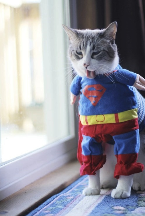 20 Adorable cats dressed as superheroes: superman