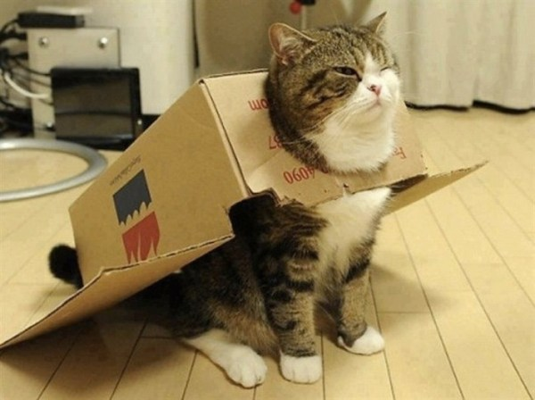 20 Adorable Cats Dressed as Superheroes: Box Cat