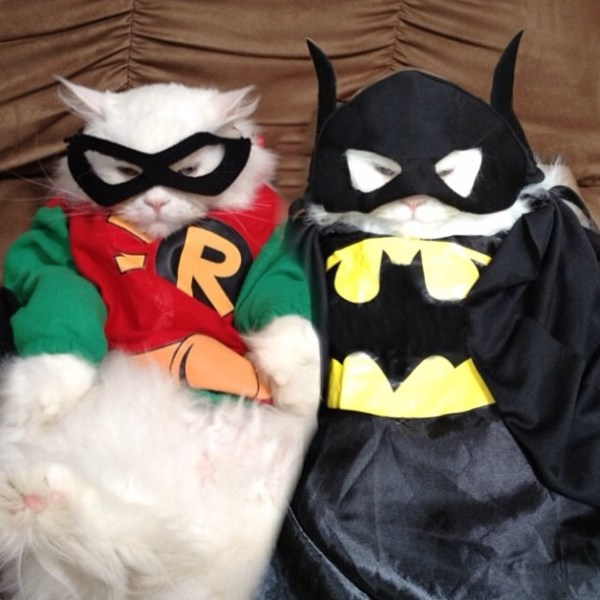 20 Adorable Cats dressed as superheroes: batman and robin