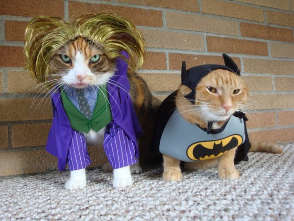20 Adorable Cats Dressed as Superheroes: Batman and Joker