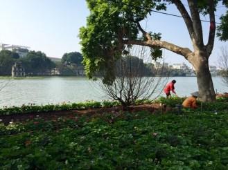 lago Hoàn Kiếm - Hanói