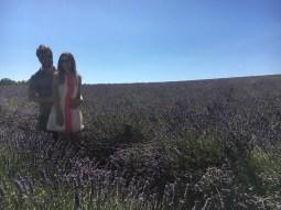 Campos de lavanda - Provence