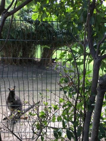 Cangurus na parte externa do Zoo - Jardin des Plantes