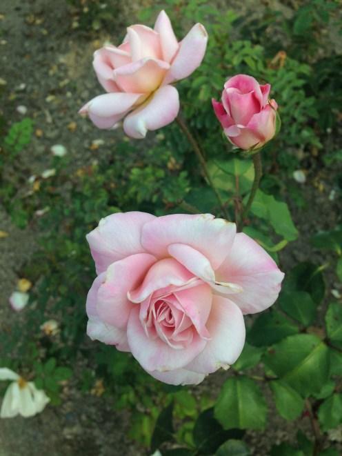 Jardim inglês da Casa DiorJardim inglês da Casa Dior