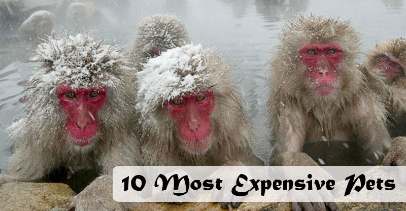 expensive-pets-of-the-world