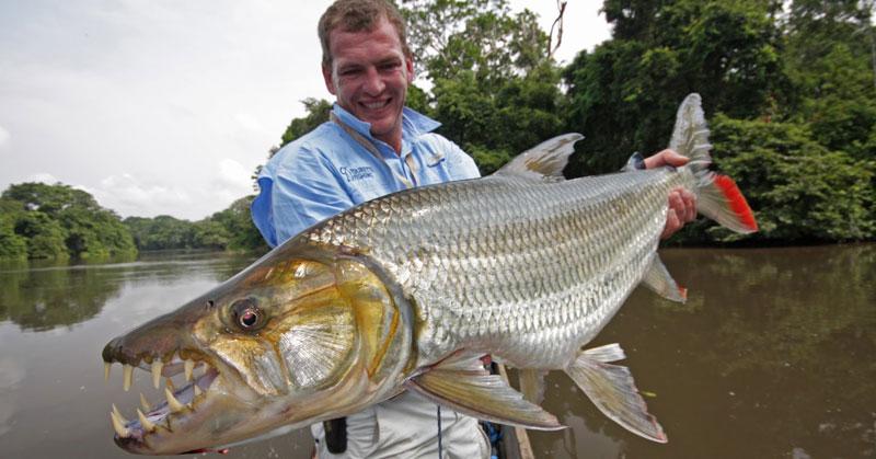 Strangest-Fish-Congo-tiger-Fish