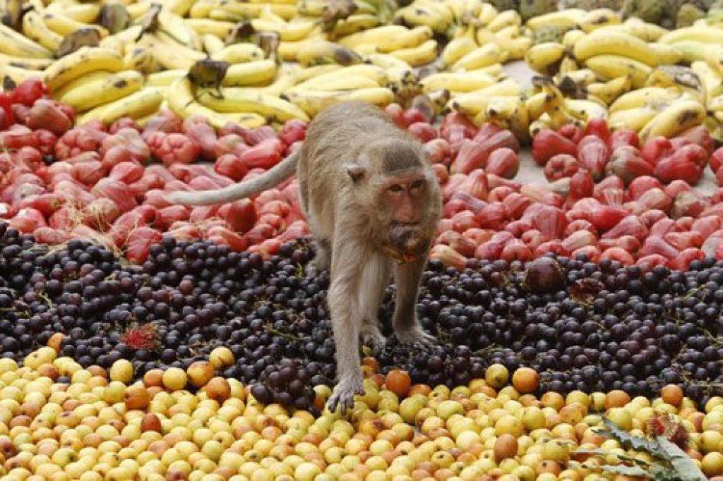 Maymun Festivali (Tayland)