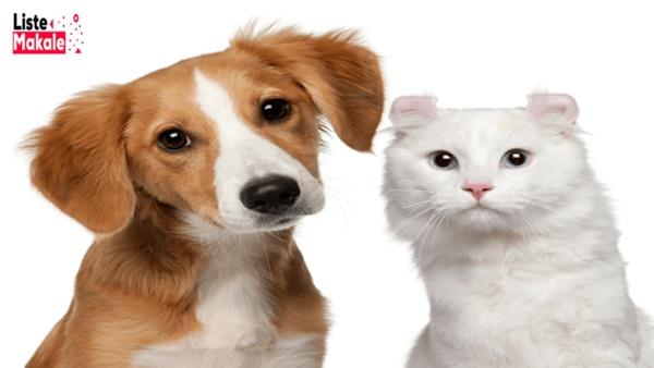 Pet Sigorta Nedir, Ne İşe Yarar?