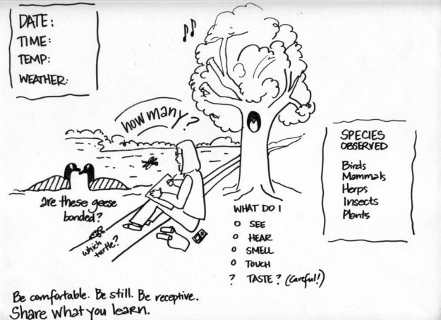 Drawing of person recording observations in nature