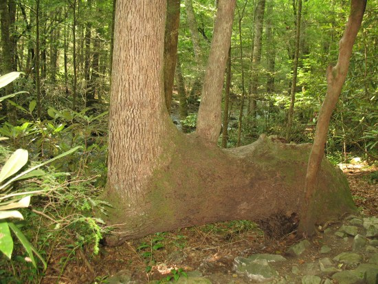 The bent and twisted tree