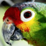 Birding Festivals And Events