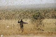 """África se enfrenta a un """"triple desastre"""": el covid-19, inundaciones y una plaga de langostas"""
