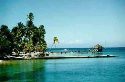 Coconuttreetn