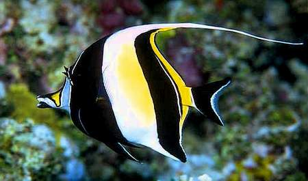10 Incredibly Beautiful Fishes - Listverse