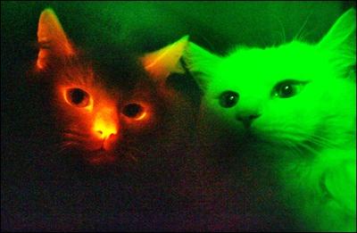 8734-Cloned Cats Glow Dark Agree Kind Experiment Improve Human Life Way