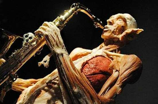 body-worlds-exposition01.jpg