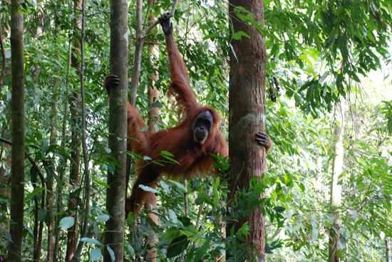 Bukit Lawang-Tropical Rainforest Heritage Of Sumatra-Hd