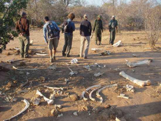 Zambia.1182957240