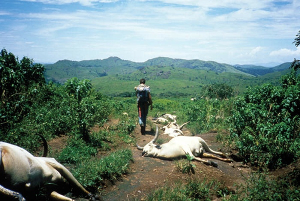 27492-Lake-Nyos--Cameroon--Gas-Release-August-21--1986--Dead-Cattle-An
