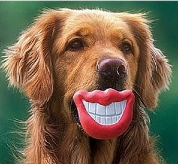 12 Funny Dogs Posing With Their Chew Toys | DogExpress |Fun Dog Toys