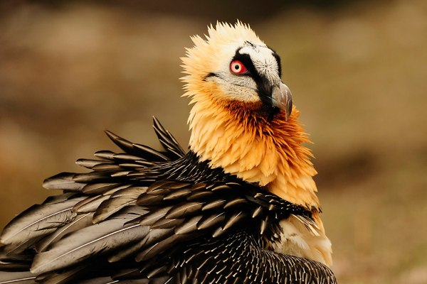 Top 10 Birds Most Likely To Kill You - Listverse