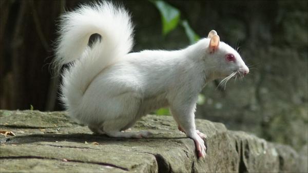 55256963 Squirrel