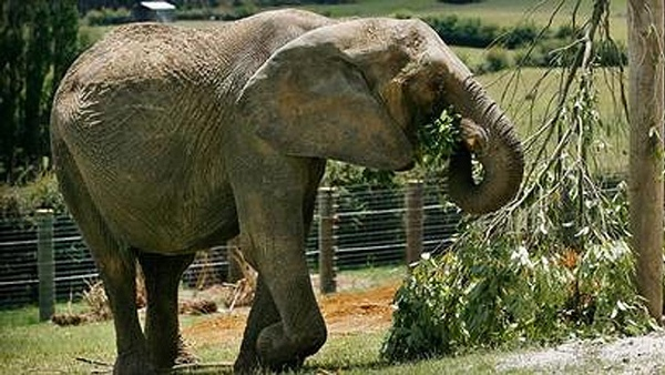 Mila-The-Elephant--Nzh
