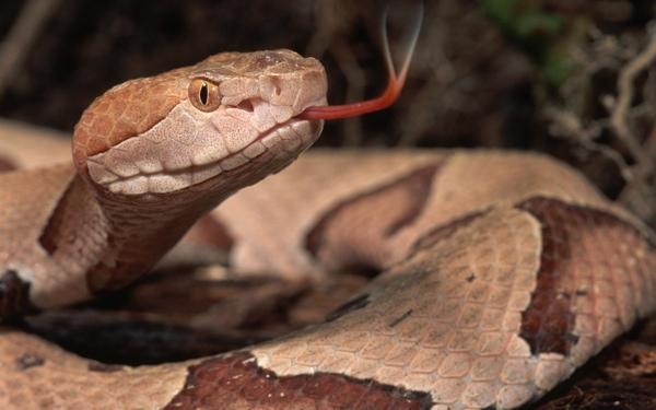SnakeAnimal-Wallpaper-1434-1800x2880.jpg