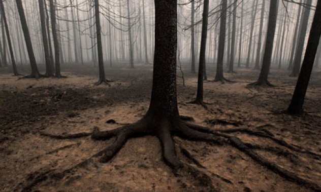 Burnt-Russian-Forest-Afte-005