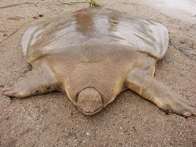 turtle_3_238470