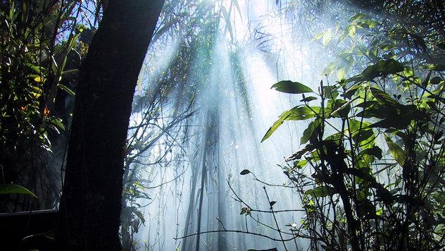 rsz_african-jungles