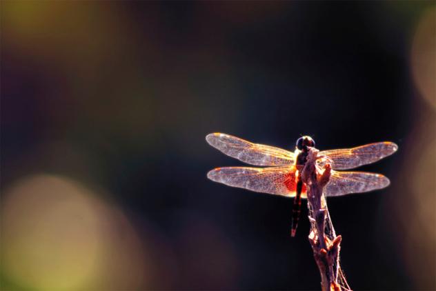 1 mayfly