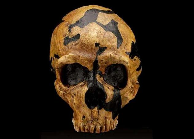 10_Shanidar_skull