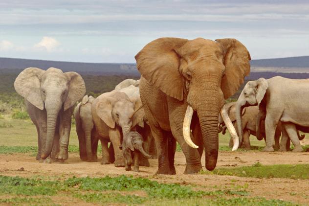 8- elephant