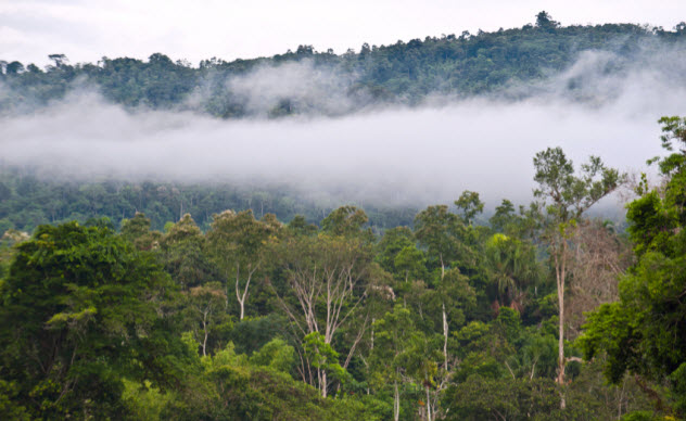 4-rain-forest_000048772556_Small