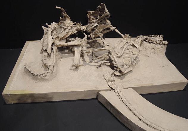 Protoceratops vs Velociraptor