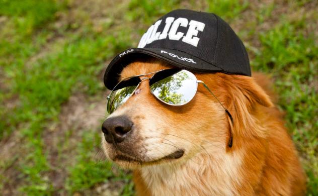 6-police-dog_000019851708_Small