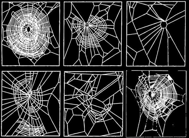 bonus-spiders-on-drugs
