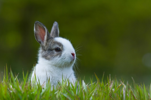 Baby rabbit in grass