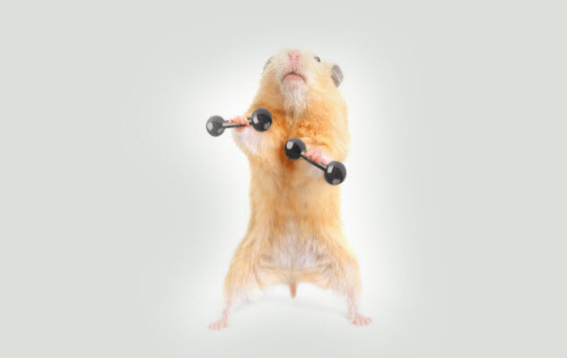 7-hamster-lifting-weights_000030516282_Small-bkgr